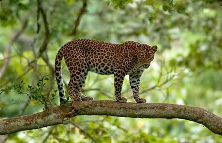Kabini Wildlife Sanctuary, Karnataka
