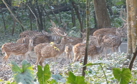 Parmadan Deer Forest