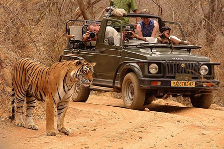 Ranthambore, Rajasthan