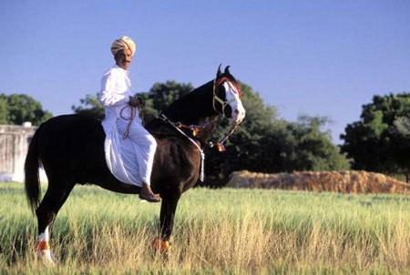 Village Horse Safari
