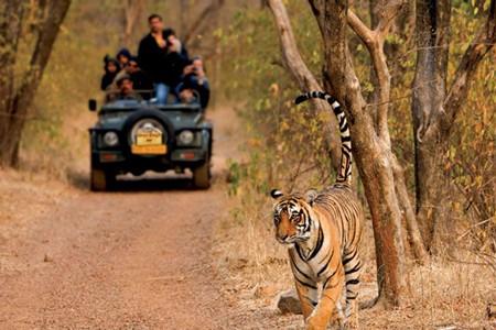 Jungle Safari in Open Jeep