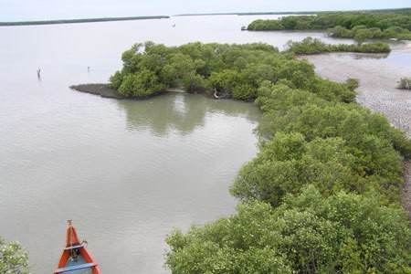 Muthupet Mangroves