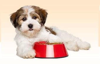 Dog Food Suppliers In Delhi