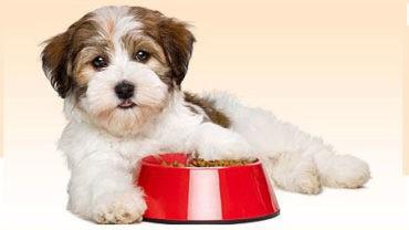 Dog Food Archives - Most Popular - ScoopHub