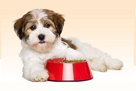 Dog Food Brands in India